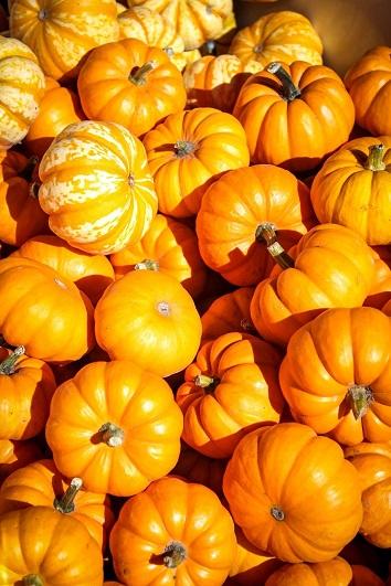 pumpkins-agribuzz
